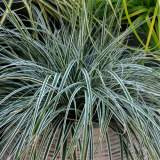 Carex Everest 2lt